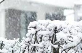 大雪.png